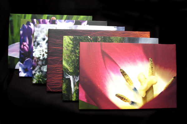 canvas prints art show photography flowers stream fungi
