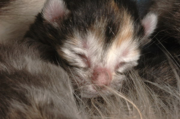 cute kitten face newborn cat baby